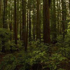 Предвечерний лес