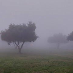 Уж как пал туман