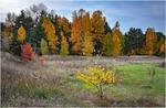Осінні барви