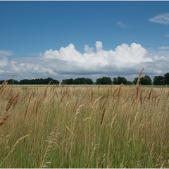 Трави лугові