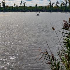 Рибне місце