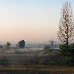 Туман на луках
