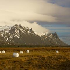 Iceland. Fields.