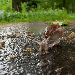 прогулянка в дощ