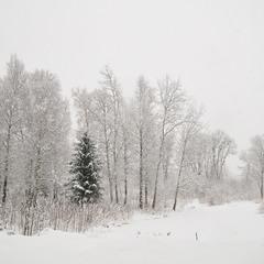 Снігопад