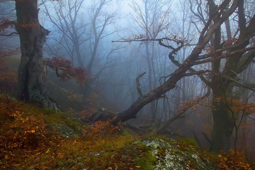 Фильм таинственный лес скачать торрент