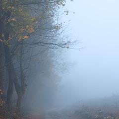 Осінній туман