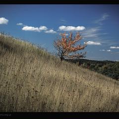 Осіннє дерево, під небом мальовничим
