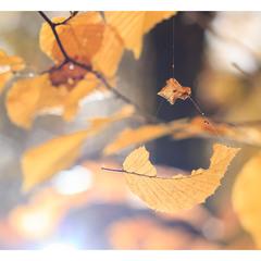 Осінні качелі