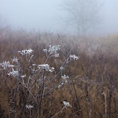 сховатись в туман