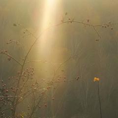 жовте листя-- сонця впіймане тепло