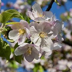Весна бушует!
