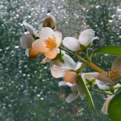В акварели дождя