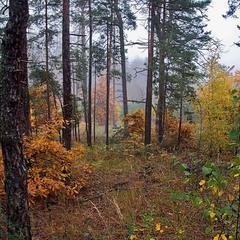 В грибном лесу