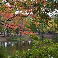 Осени узор