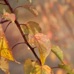 Вспоминая осень