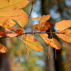 Осенний десант