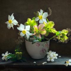Найпрекрасніші квіти - ті, які розцвітають на холоді. Джон Апдайк.