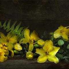 Желтые цветы после летнего дождя...