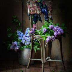 """Из серии """"Весна в старом доме..."""""""