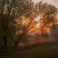 Вечірнє сонце, дякую за день...