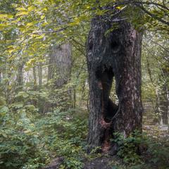 Безмолвный крик природы