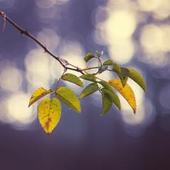 Здравствуй осень...