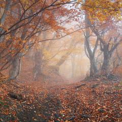 Туманами осени