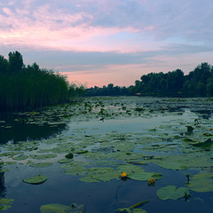 Ранок на Дніпровській протоці.