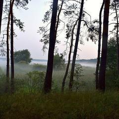 Туманний ранок у лісі.