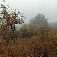 Жовтень, туман.