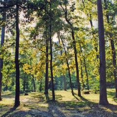 Мой солнечный лес