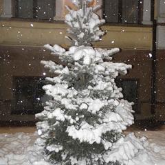 С первым снегом, днепряне!