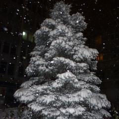 Падает, падает снег...