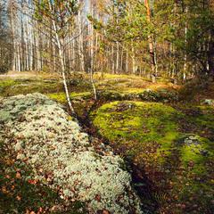 Лесные ковры