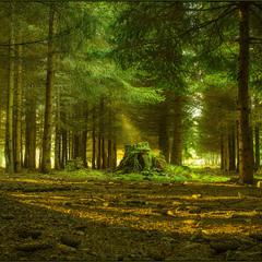 Лесной подиум