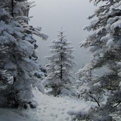 маленькой ёлочке холодно весной))