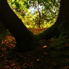 У Лукоморья дуб...