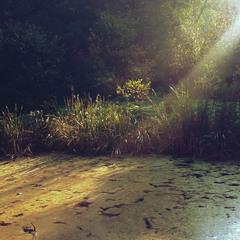 Ранок на болоті