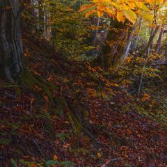 На Карпаты падает осень