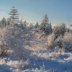 Зима по пояс...