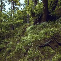 Пасмурный день в лесу