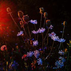 На городі сонечко сідає