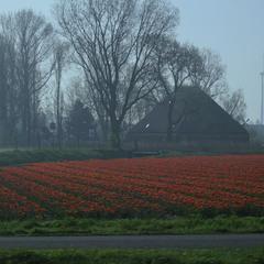 Утро в голландской деревне...