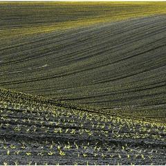 Empty Spring Field №1