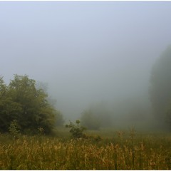 The mist in mountains