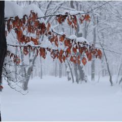 Зима в КВАДРАТЕ