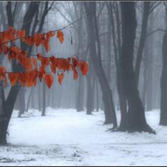 Перектрёсток Осень - Зима
