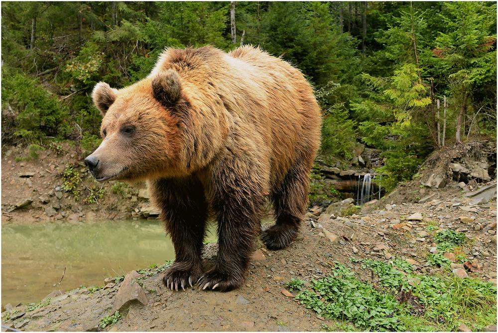 Картинки с животными украина