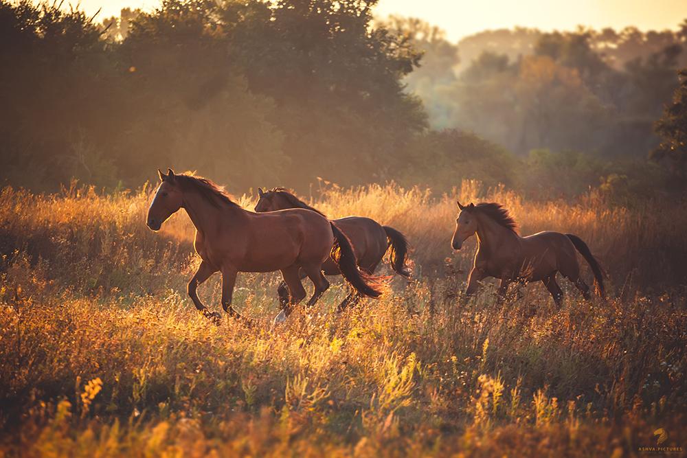 Картинки с изображением лошадей на восходе и закате